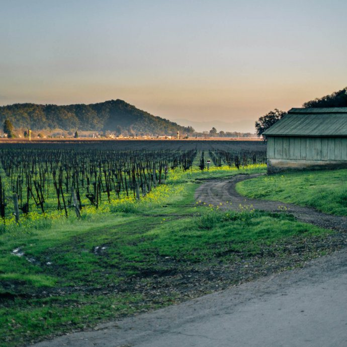 Yountville in Napa Valley by The Taste Edit vineyards and a barn with mustard growing