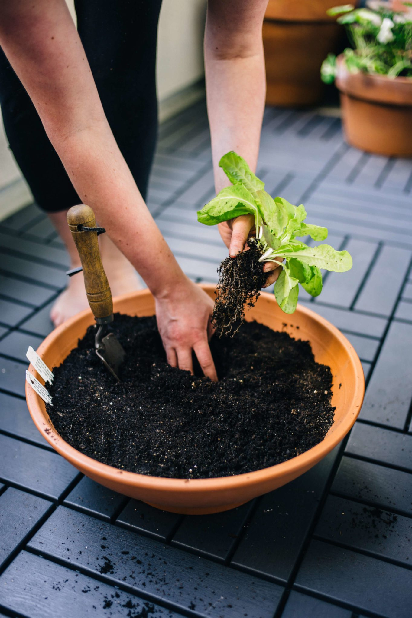 See how to plant a container garden in the city, the taste sf