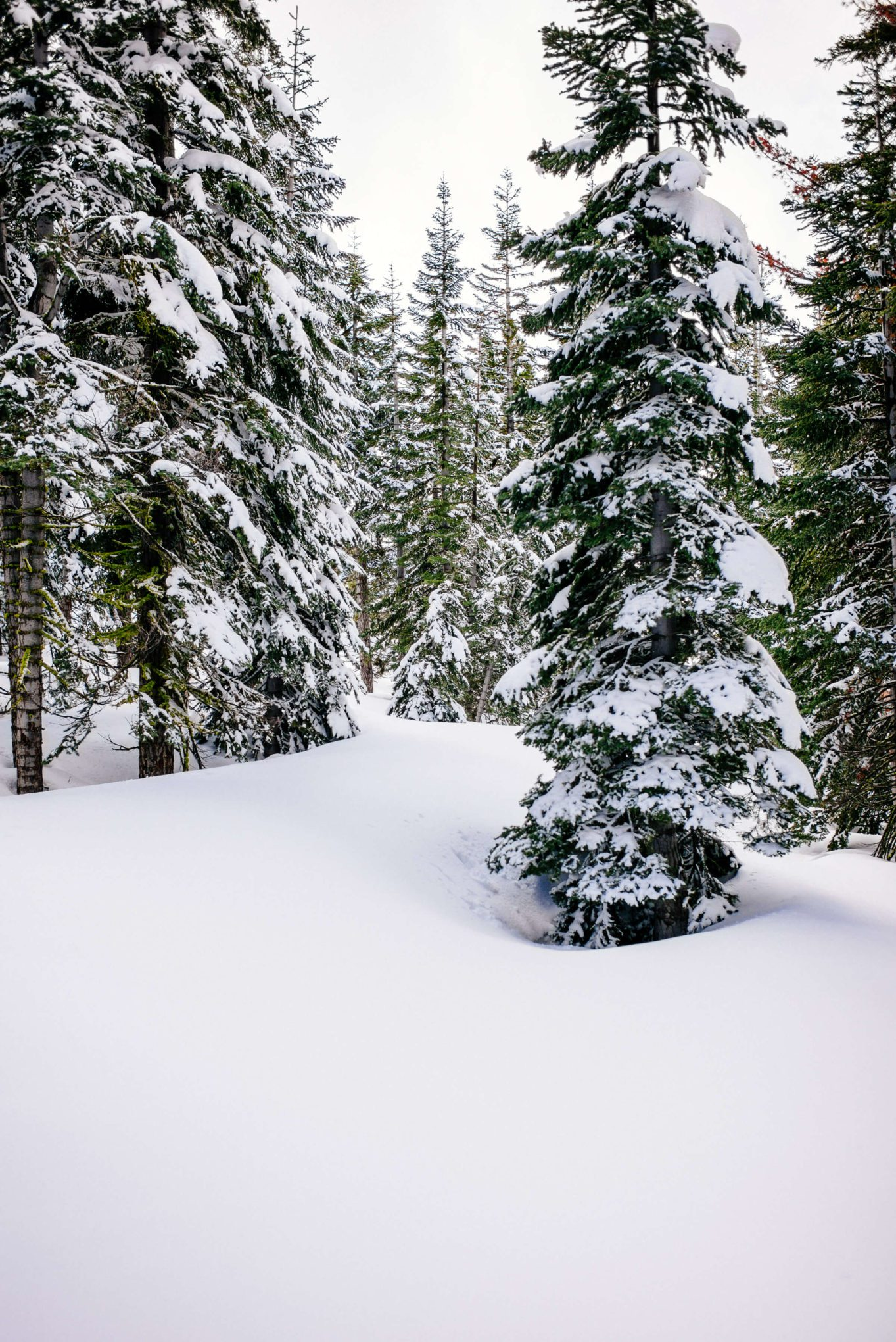Trees covered in snow at Northstar California and The Ritz-Carlton hotel, The Taste SF