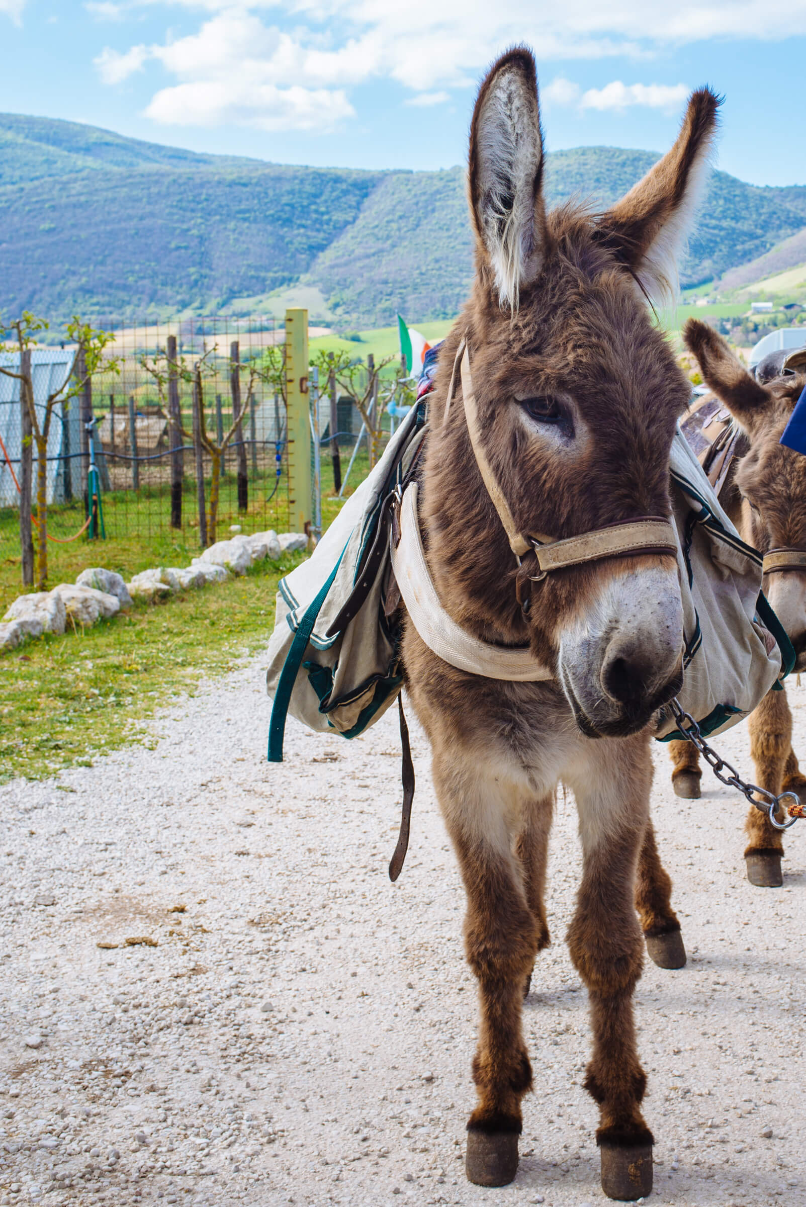 Riding Donkeys in Norcia Umbria Italy countryside, The Taste SF
