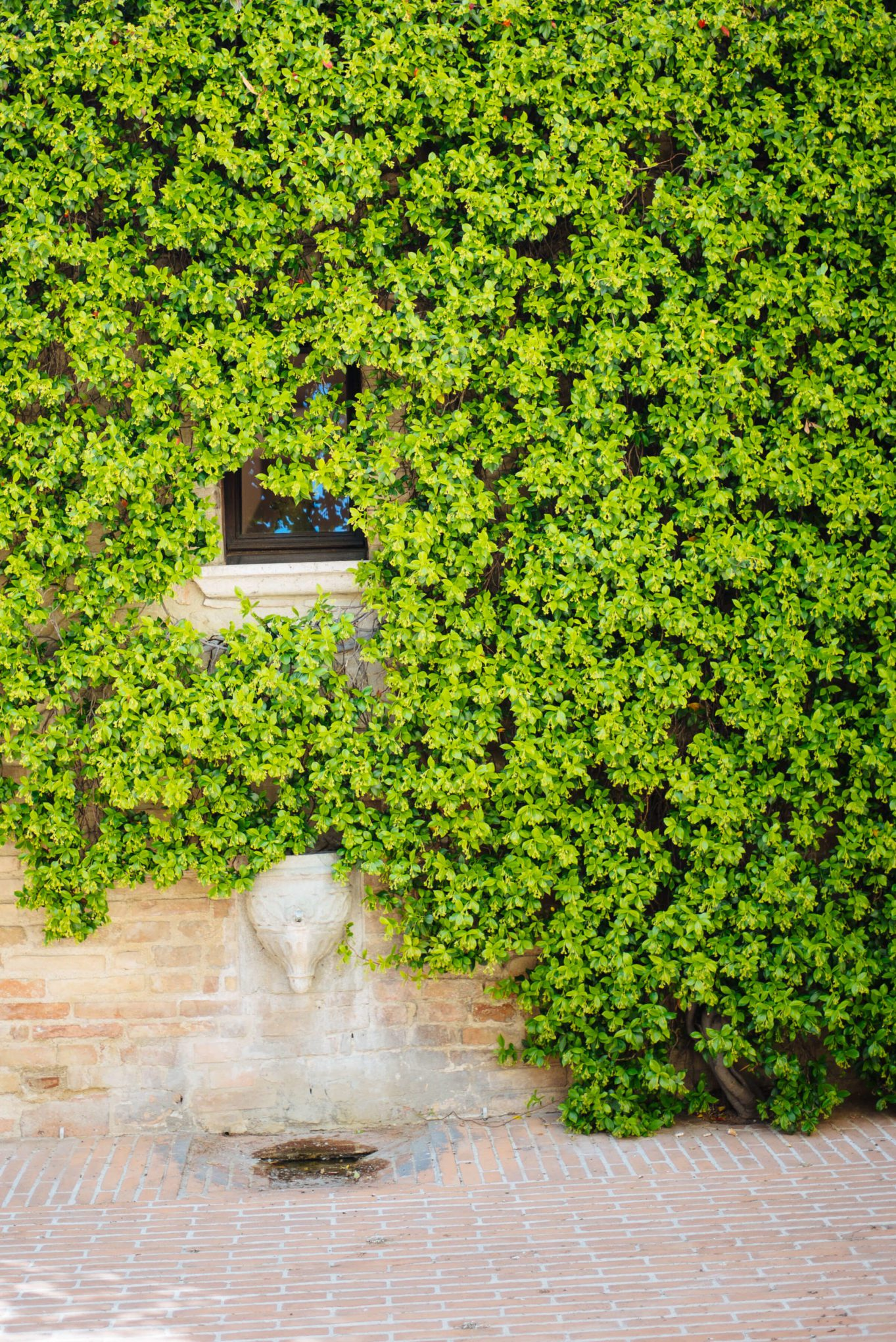 Vines on the walls of Brunello Cucinelli Solomeo, The Taste Edit