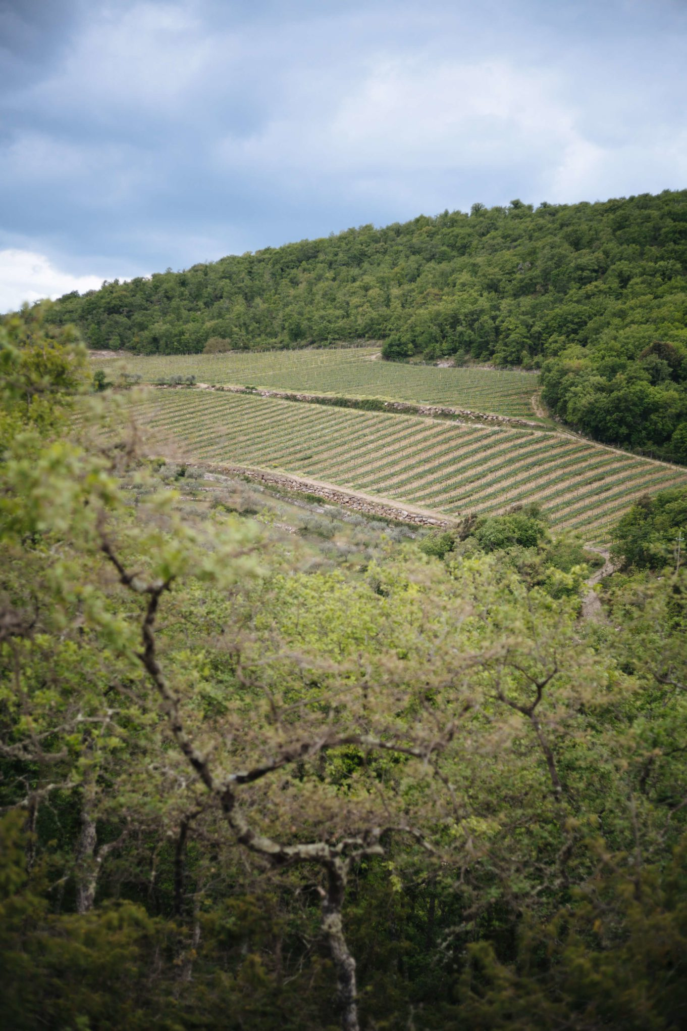 Vineyards of Monteraponi Winery, Chianti, The Taste SF