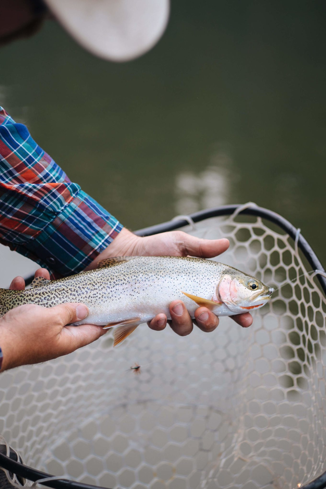 Fly fishing on the blackfoot river at paws up glamping in Montana, The Taste SF