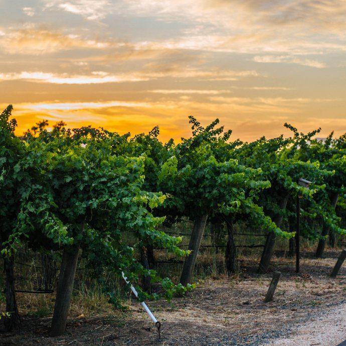 Sunset over Napa Valley Vineyards, The Taste Edit, wine country The Taste San Francisco