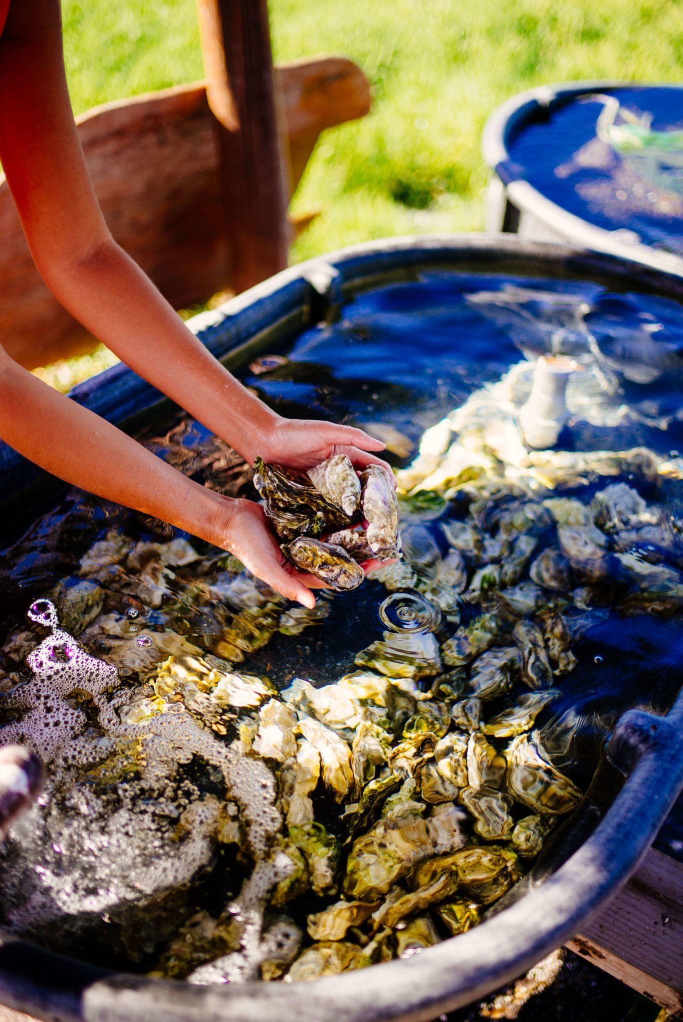 The Four Seasons Hualalai raising their own oysters to serve at their restaurants in Kona Hawaii, The Taste SF