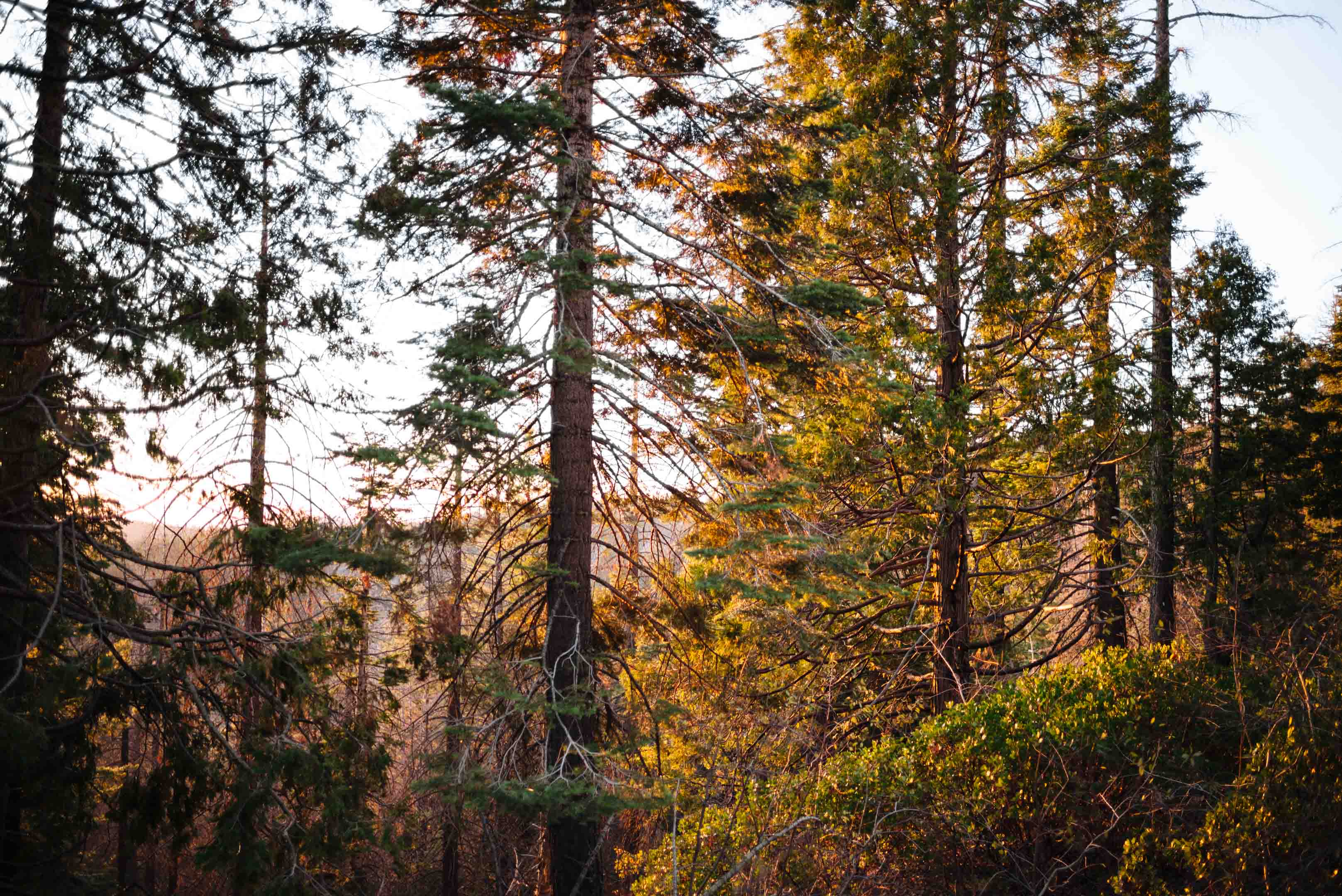 Watch the sunset through the trees in Yosemite National Park in Tuolumne County California