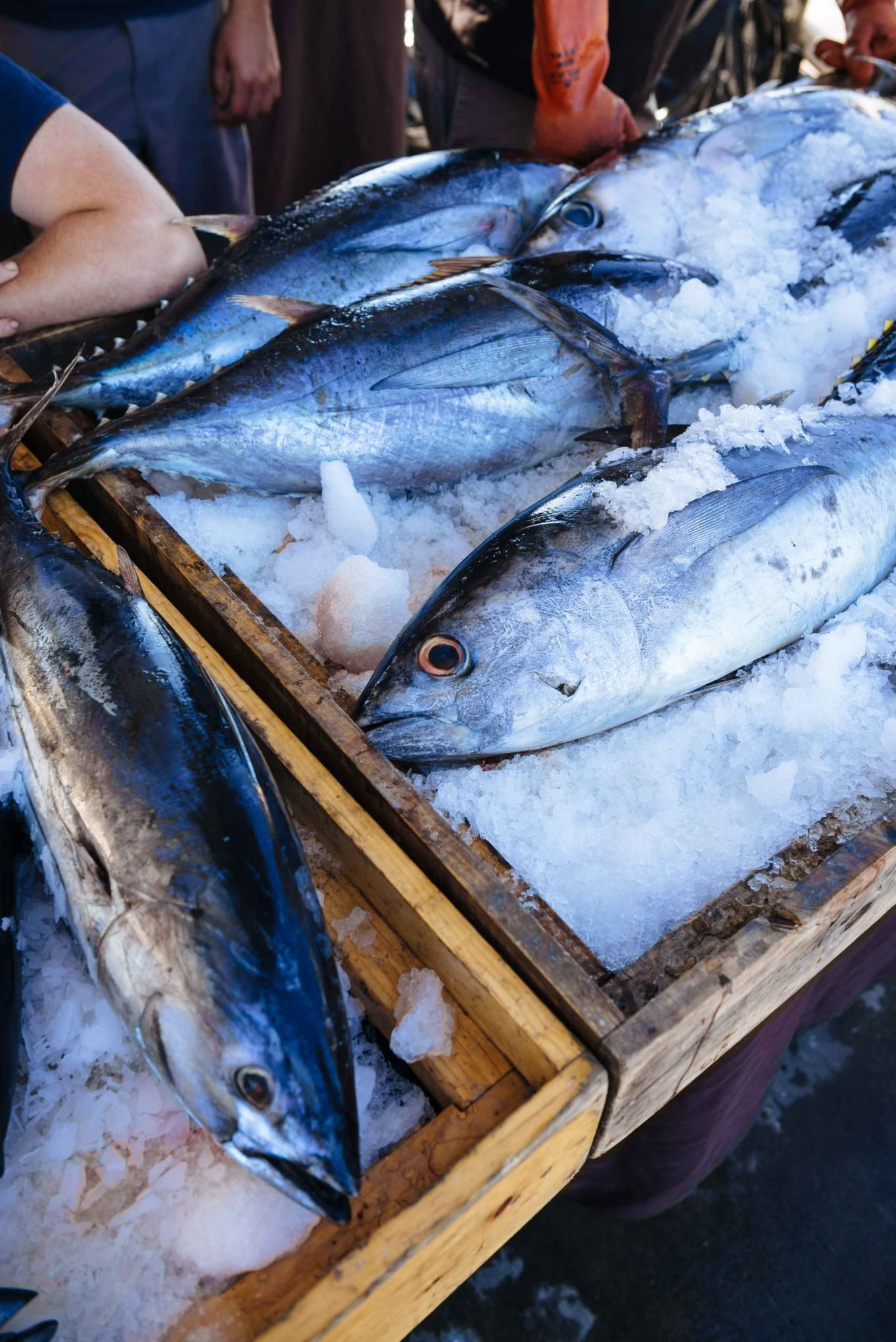 Visit the Tuna Harbor Dockside market for the freshest fish