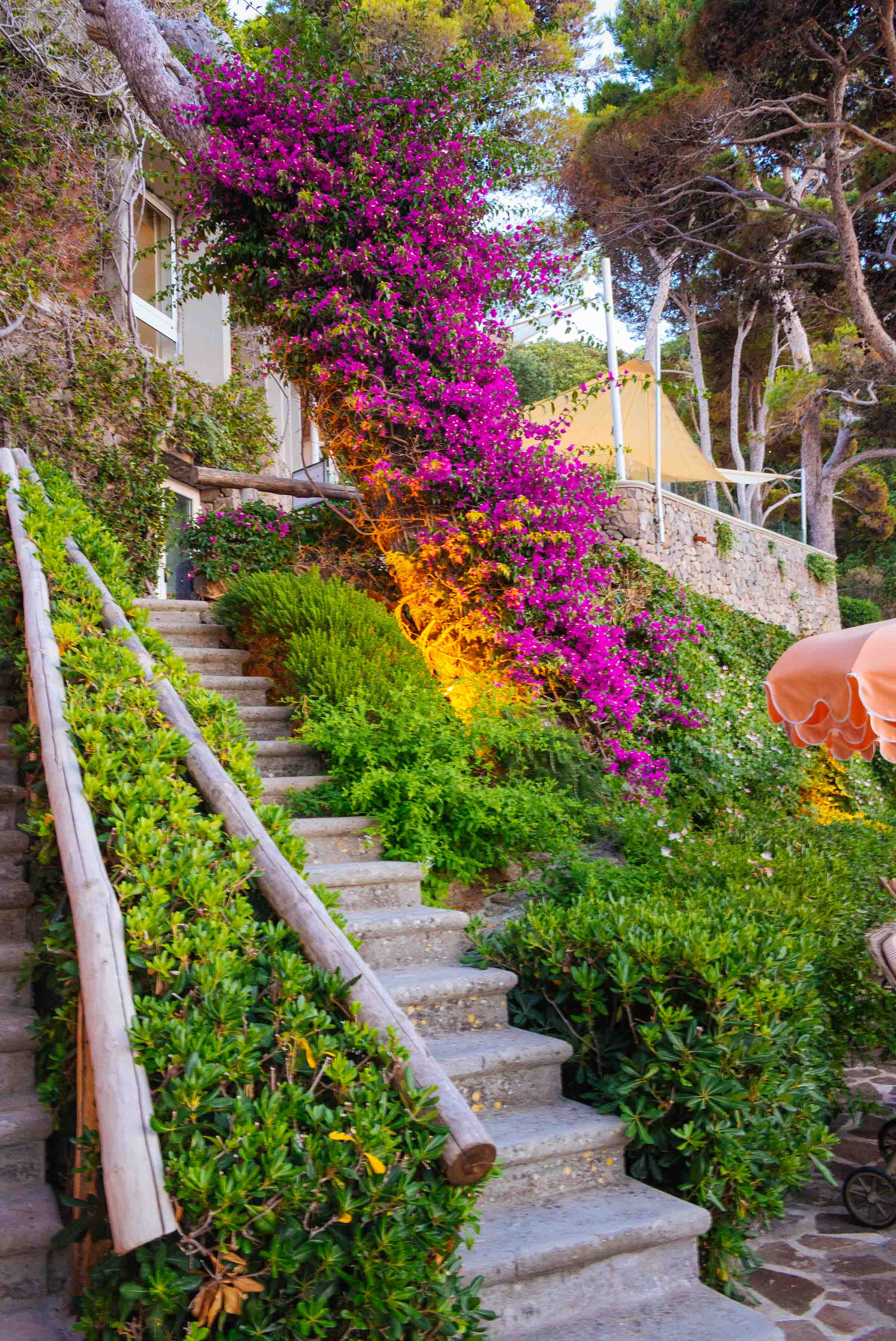 Beautiful bougainvilleas at the best hotel in Ischia the Mezzatorre Thermal Spa, Photo by The Taste SF and Sarah Stanfield